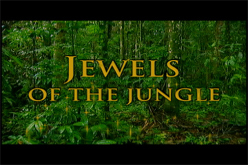 TERRA 303: Jewels of the Jungle – Part 1