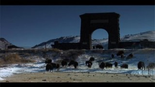TERRA 427: The Bison Haze: A Yellowstone Controversy – Part 3