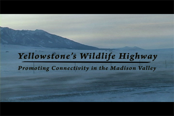 TERRA 434: Yellowstone's Wildlife Highway