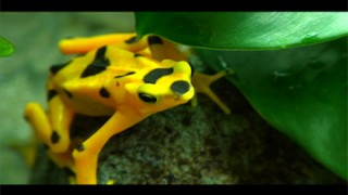 TERRA 448: Frog, Chemical, Water, You – Part 1