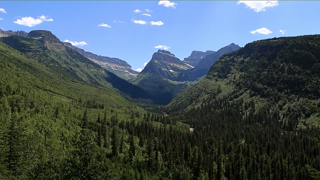 TERRA:  If you could be any animal in Glacier National Park, which would you be?