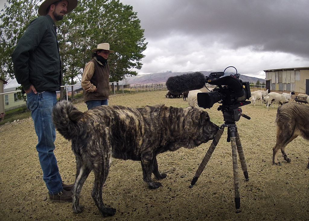 Science And Natural History Filmmaking