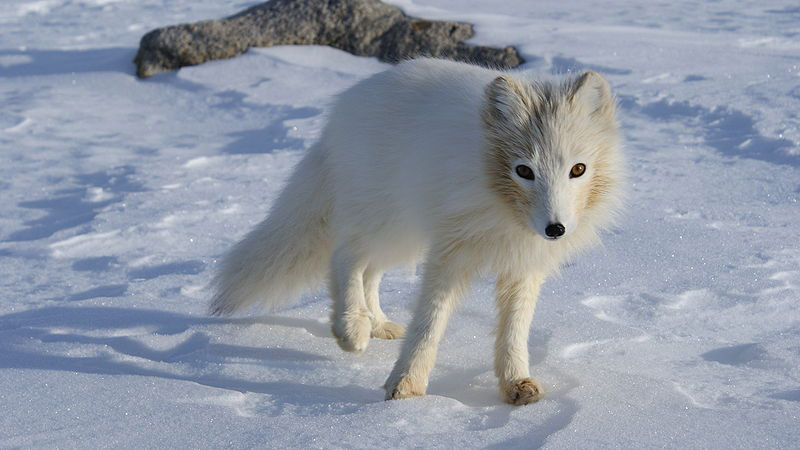 TERRA:  If you could be any snow-loving animal which would you be?