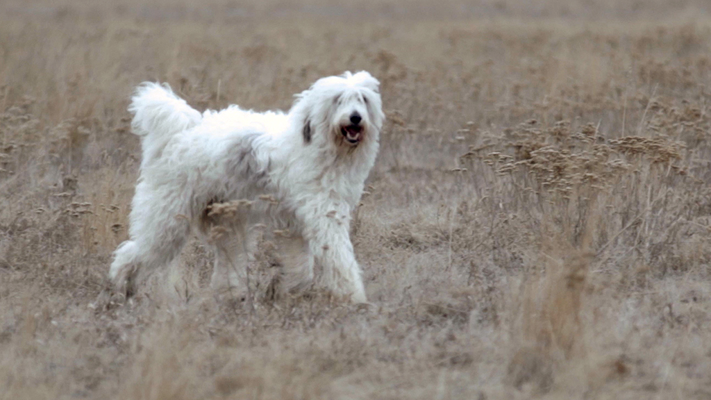 TERRA: What inspired you to make a film about dog breeds?