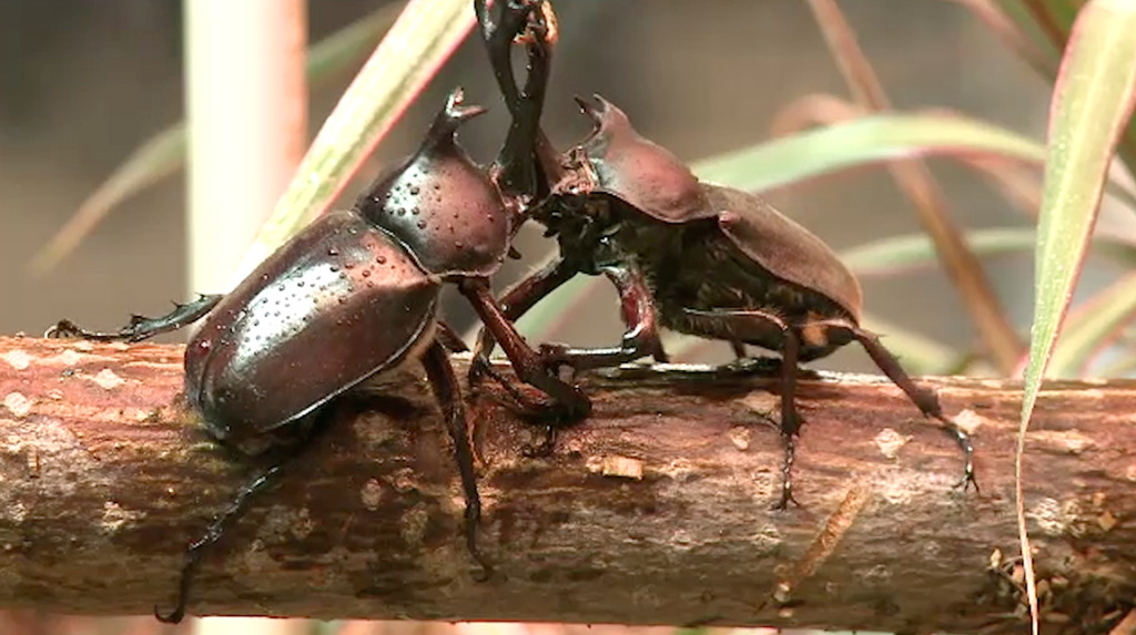 TERRA: What surprised you the most about working with beetles?