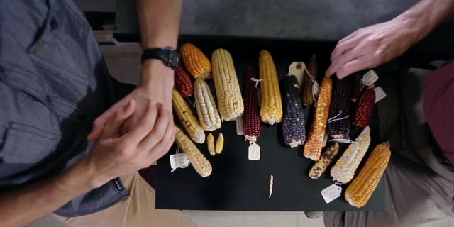 TERRA 1115: Popped Secret: The Mysterious Origin of Maize